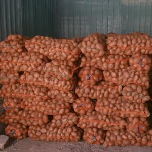 camp cartofi 64