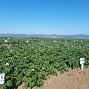 Simpozionul National Ziua Verde a Cartofului Editia XLIV 2021