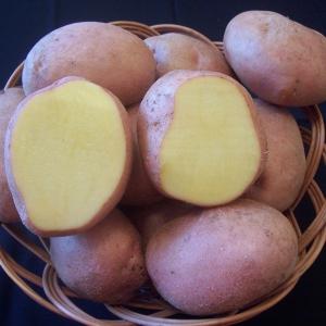 Soiuri cartof