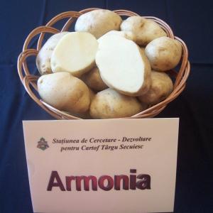 soiuri cartofi armonia