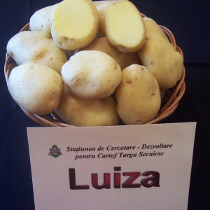 soiuri cartofi luiza