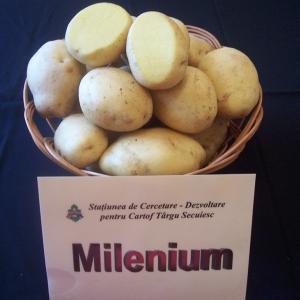 soiuri cartofi milenium
