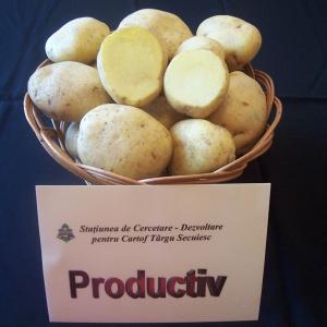 soiuri cartofi productiv
