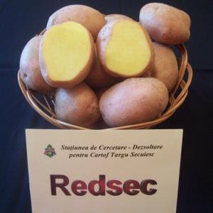 soiuri cartofi redsec